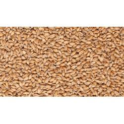 Солод пшеничный «Вит» «Castle Malting» Бельгия
